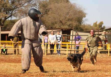 1200-489117192-dog-chasing-on-police-man